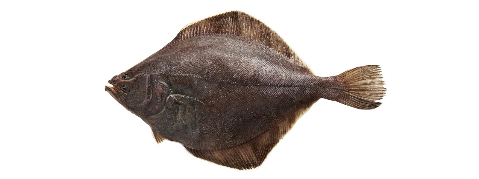 Alaska sole